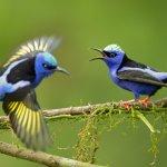 Meilleures photos du Nicaragua, oiseaux